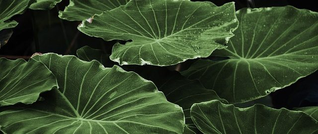 http://pixabay.com/static/uploads/photo/2014/04/07/16/51/leaf-318743_640.jpg?i Blätter GLady, Public Domain CC0